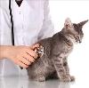 Ветеринарные клиники в Клетском